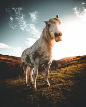 Horse Farm Stallion #352229
