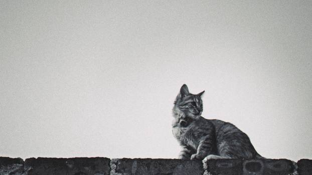 Black and Gray Tabby Cat on Concrete Block #35246