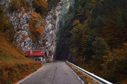 Road Landscape Trees #352709