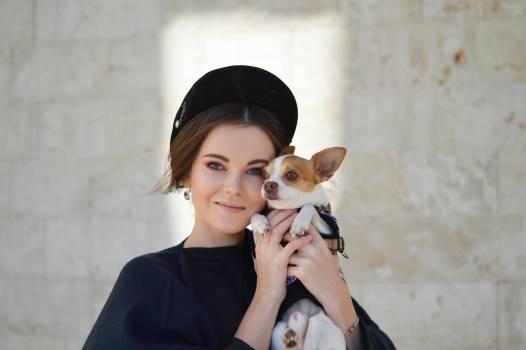 Chihuahua Dog Toy dog #353448