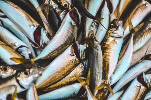Tuna Fish Food fish Free Photo