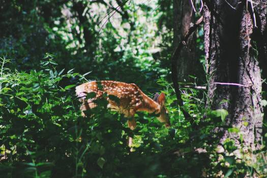 Canine Tree Mammal #354948