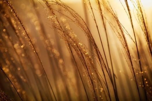 Wheat Texture Design Free Photo