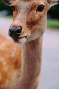 Llama Mammal Wildlife Free Photo