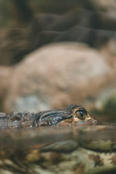 Reptile Insect Arthropod Free Photo