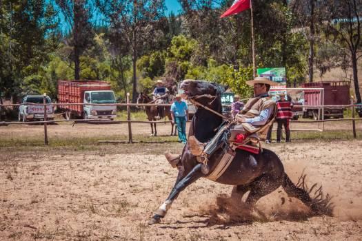 Horse Vaulting horse Cowboy Free Photo