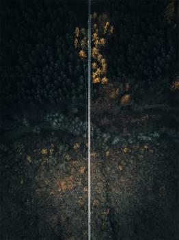 Forest Tree Landscape #355521