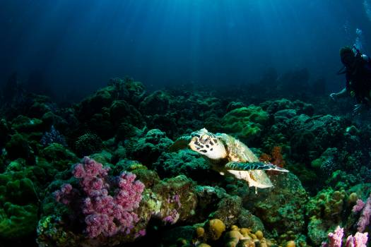 Coral reef Reef Ridge #355643