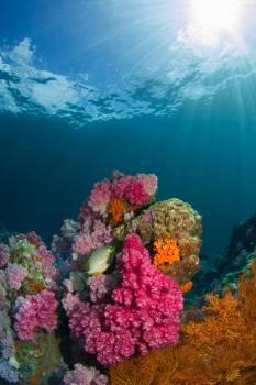 Coral reef Reef Ridge #355741