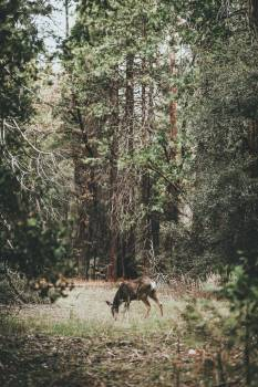 Canine Wolf Wild dog #355875