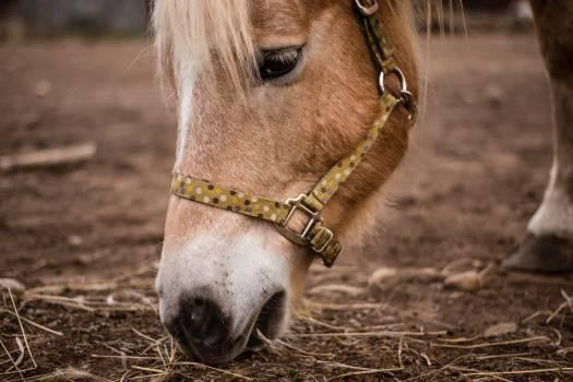 Bridle Headgear Horse #355889