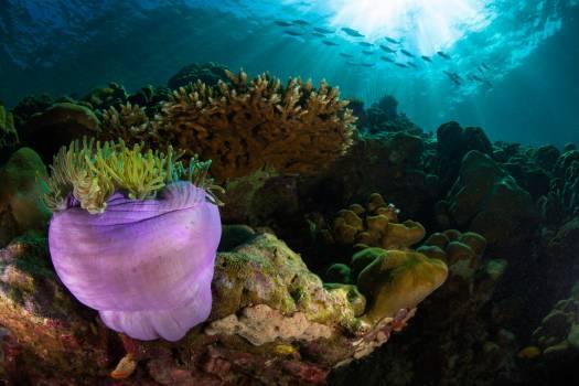 Coral reef Reef Underwater #355907