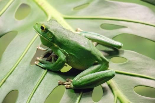 Tree frog Frog Amphibian #356313