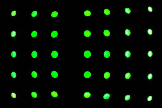 Polka dot Design Decoration #356586