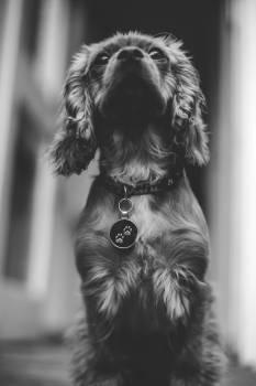 Dog Braid Portrait #356855
