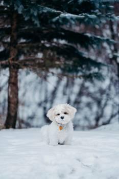 Snow Weather Winter #357157