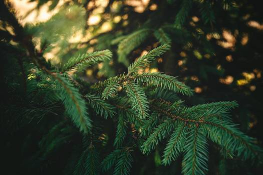 Green Needle Leaves #35730