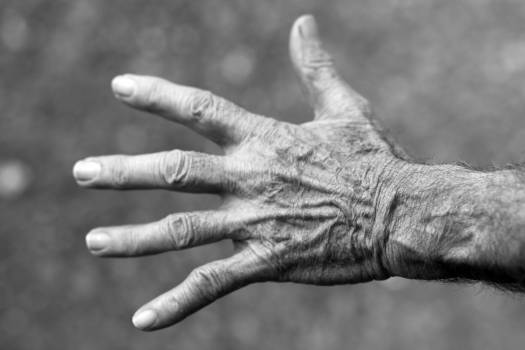 Grayscale Photo of Left Human Hand Free Photo