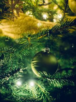 Holidays tree christmas xmas #35746
