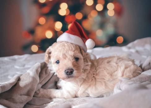 Dog Puppy Pet Free Photo