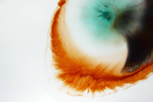 Fruit Eye Mollusk Free Photo