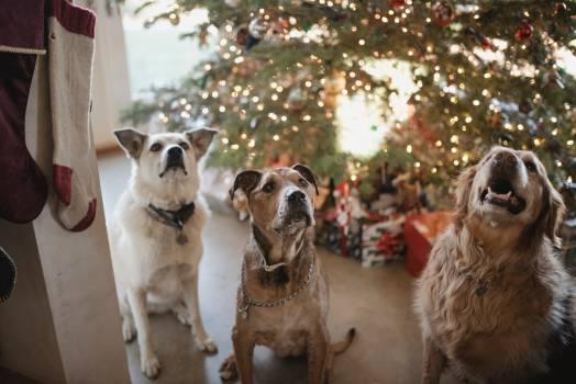 Dog Canine Pet #357861