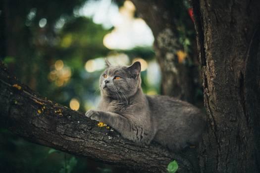 Kitten Cat Feline #358122