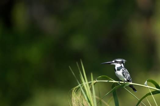 Bird Woodpecker Wildlife Free Photo