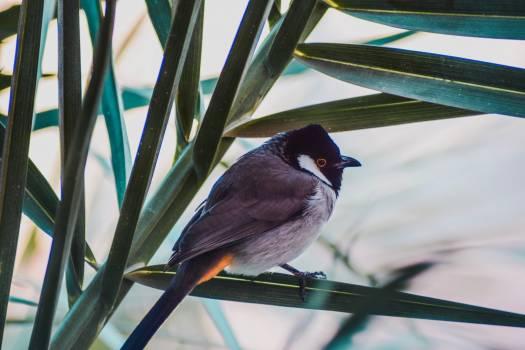 Nightingale Thrush Bird Free Photo