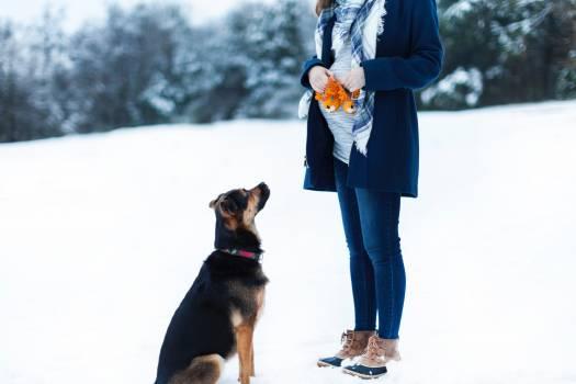 Dog Canine Pet #359091