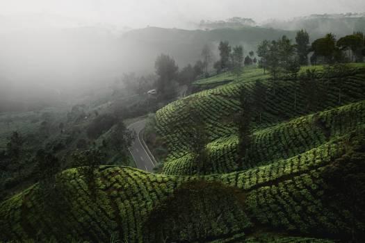 Maze Landscape Agriculture #359121