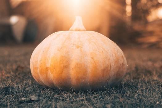 Pumpkin Squash Onion #359844