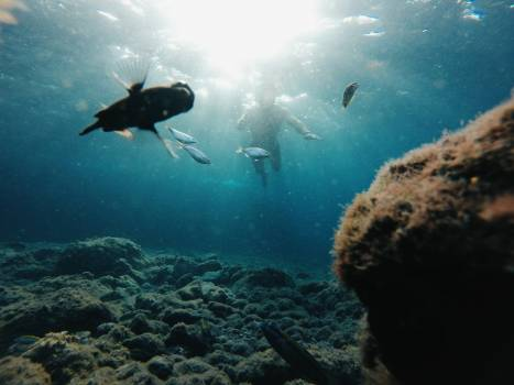 Ocean Underwater Swimmer #360244