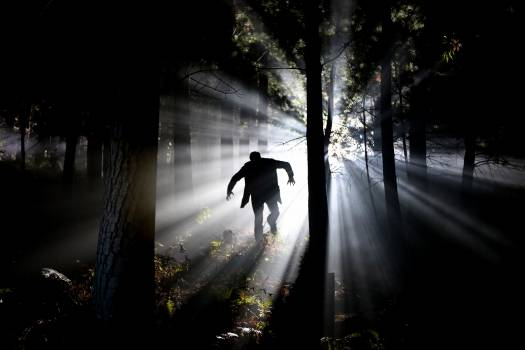 Silhouette of Man Running on Forest Free Photo