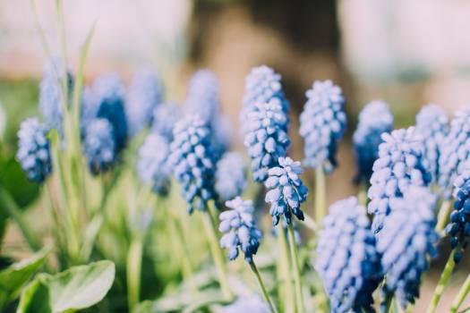 Blue Flower Buds during Daytime #36064