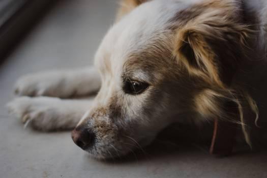 Dog Canine Pet #360683