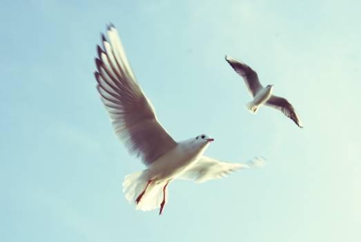 Sky flying animals birds #36070