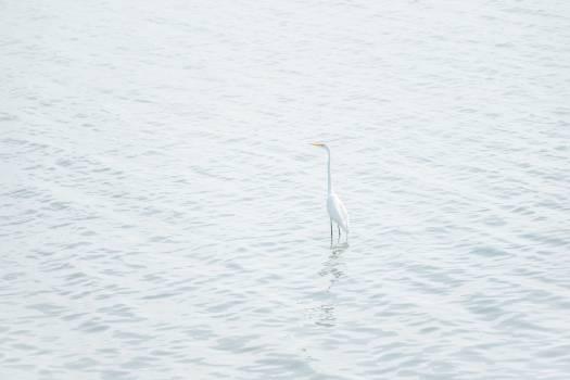 Heron Water snake Water #360816