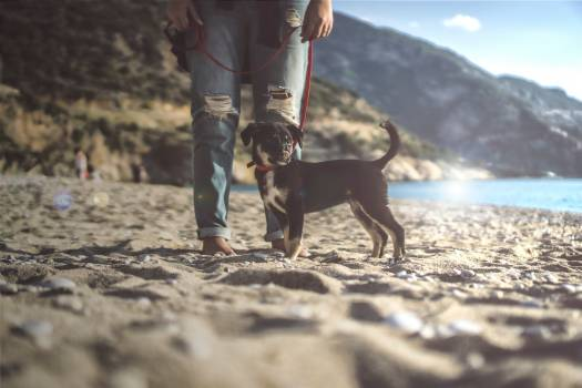 Dog Canine Pet #360846