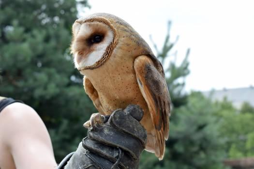 Hunter Animal Bird Free Photo