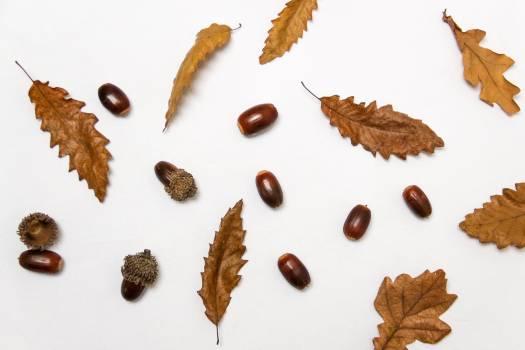 Brown Food Seed Free Photo