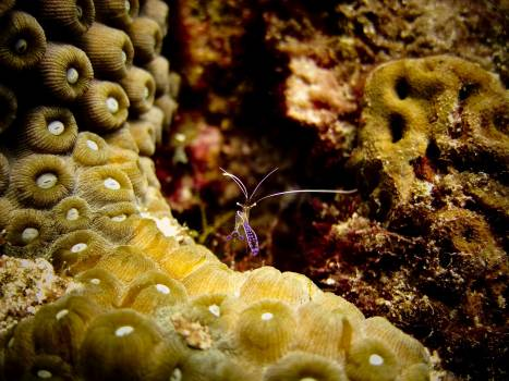 Coral Polyp Underwater #361655