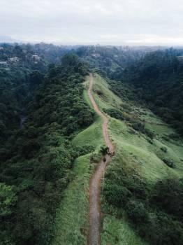 Ascent Tree Slope Free Photo