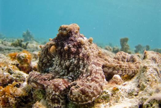 Mollusk Underwater Sea #361984