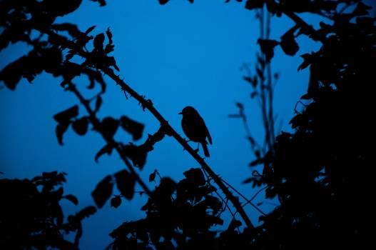 Bat Tree Placental Free Photo