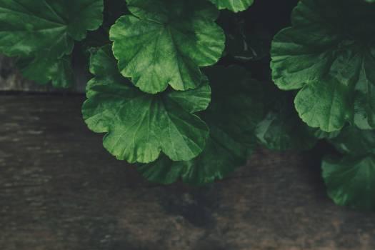 Green Plant Free Photo