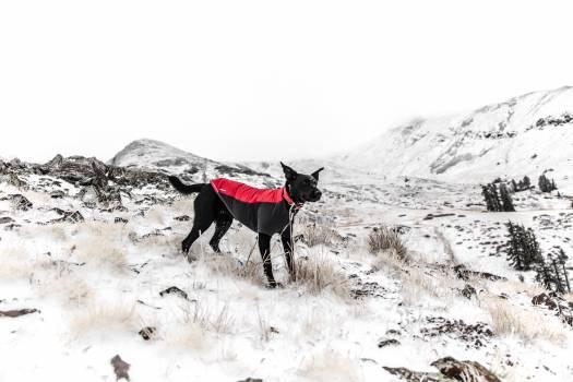 Harness Snow Dog #362201