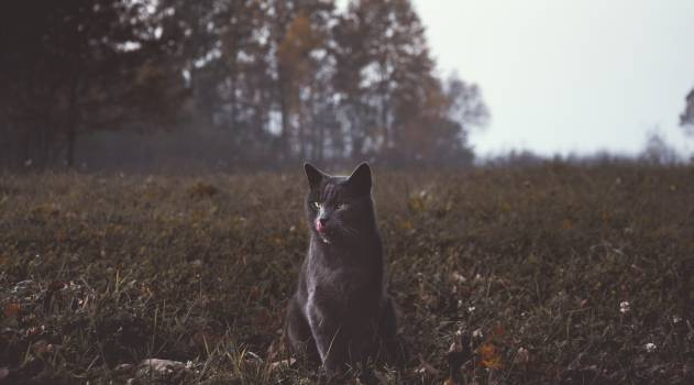 Cat Shepherd dog Domestic #362363