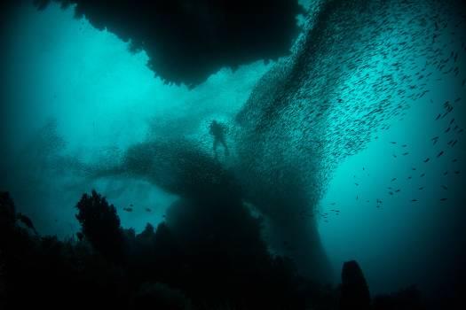 Underwater Sea Ocean Free Photo