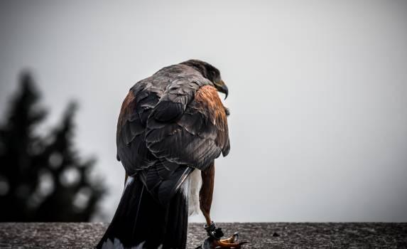 Hunter Bird Wildlife Free Photo